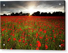 Poppy Field At Sunset Acrylic Print by Doug Chinnery