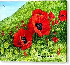 Poppy Field Acrylic Print by Tanja Ware