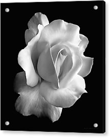 Porcelain Rose Flower Black And White Acrylic Print by Jennie Marie Schell