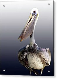 Pouches Acrylic Print by Skip Willits