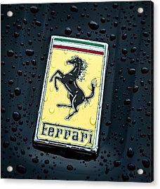 Prancing Stallion Acrylic Print by Douglas Pittman