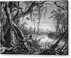 Preditor In Paradise Acrylic Print by Douglas Barnett