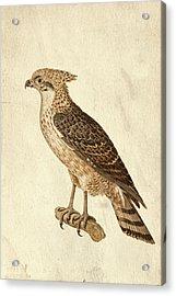 Preditor In Sepia Acrylic Print by Douglas Barnett