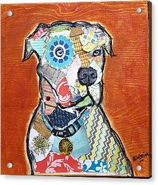 Pretty Boy Pitbull Acrylic Print by Theresa Bendzius