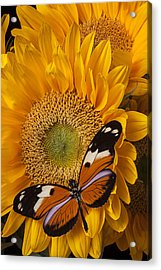 Pretty Butterfly On Sunflowers Acrylic Print by Garry Gay
