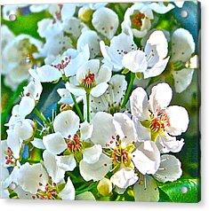 Pretty In White Acrylic Print by Gwyn Newcombe