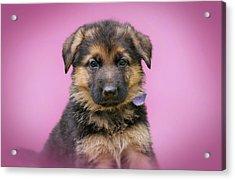 Pretty Puppy Acrylic Print by Sandy Keeton