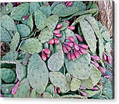Prickly Pear Cactus Fruits Acrylic Print by Mother Nature