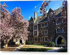 Princeton University Pyne Hall Courtyard Acrylic Print by Olivier Le Queinec