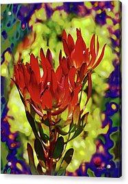 Protea Flower 4 Acrylic Print by Xueling Zou