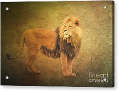 Proud Lion Acrylic Print by Jutta Maria Pusl