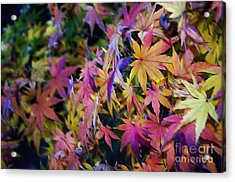 Psychedelic Maple Acrylic Print by Kaye Menner
