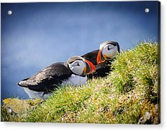 Puffin Couple In Love In Iceland Acrylic Print by Matthias Hauser