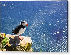 Puffin In Iceland - King Of The Hill Acrylic Print by Matthias Hauser