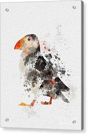 Puffin Acrylic Print by Rebecca Jenkins