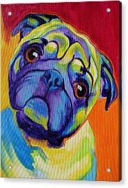 Pug - Lyle Acrylic Print by Alicia VanNoy Call