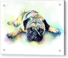 Pug Laying Flat Acrylic Print by Christy  Freeman