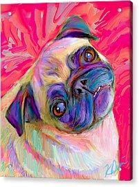 Pugsly Acrylic Print by Karen Derrico
