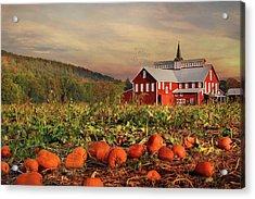 Pumpkin Farm Acrylic Print by Lori Deiter