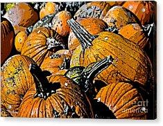 Pumpkin Sale  Acrylic Print by Juls Adams