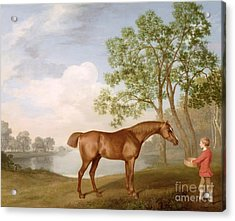 Pumpkin With A Stable-lad Acrylic Print by George Stubbs