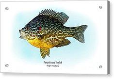 Pumpkinseed Sunfish Acrylic Print by Ralph Martens