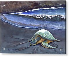 Punaluu Honu Beach Nap Acrylic Print by Michele Ross