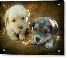 Puppies Acrylic Print by Svetlana Sewell