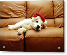 Puppy Wears A Christmas Hat, Lounges On Sofa Acrylic Print by Karina Santos