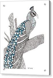 Purdy Peacock Acrylic Print by Paula Dickerhoff