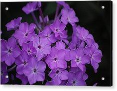 Purple Blossoms Acrylic Print by David Lane