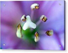Purple Botanical Acrylic Print by Frank Tschakert