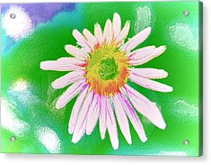 Purple Cone Flower Acrylic Print by Lanjee Chee