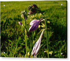 Purple Flower Acrylic Print by Ali Dover
