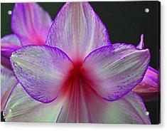 Purple Haze Acrylic Print by Donna Shahan