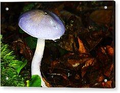 Purple Mushroom Russula Cyanoxantha Acrylic Print by Andrew Pacheco