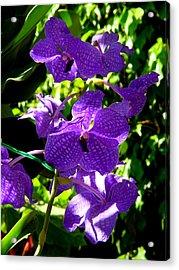 Purple Orchids Acrylic Print by Susanne Van Hulst