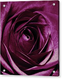 Purple Passion Acrylic Print by Cathie Tyler