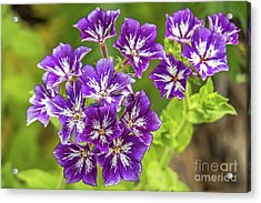 Purple Passion Acrylic Print by Kate Brown