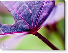 Purple Veins Acrylic Print by Christopher Holmes
