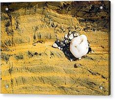 Quartz Cobble On Rock Acrylic Print by Steven Ralser