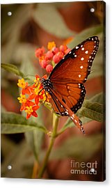 Queen Butterfly On Flowers Acrylic Print by Ana V  Ramirez