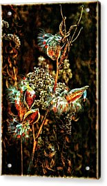 Queen Of The Ditches II Acrylic Print by Steve Harrington