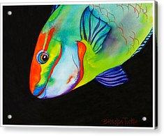 Queen Parrotfish On Black Acrylic Print by Brenda Tucker