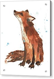 Quiet Fox Acrylic Print by Alison Fennell