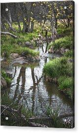 Quiet Stream Acrylic Print by Scott Norris