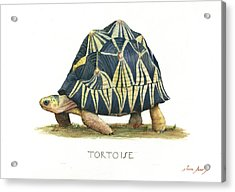 Radiated Tortoise  Acrylic Print by Juan Bosco