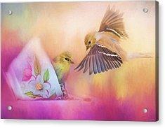 Raiding The Teacup - Songbird Art Acrylic Print by Jai Johnson