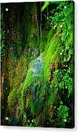 Rain Forest Acrylic Print by Louis Dallara