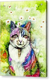 Rainbow Cat Acrylic Print by Morgan Fitzsimons